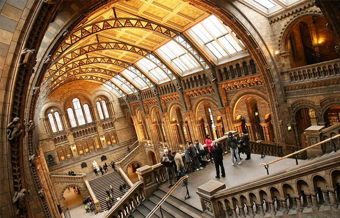 visite-musee-histoire-naturelle-londres